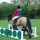 handy-pony-2