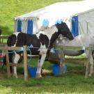 Pony camp 2010 100