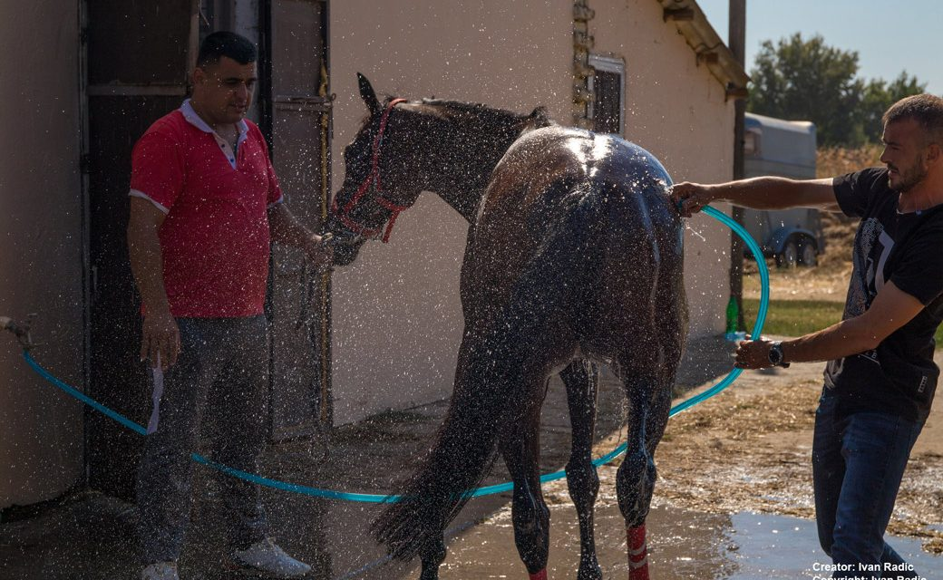 Cold Water Cooling for Hot Horses …